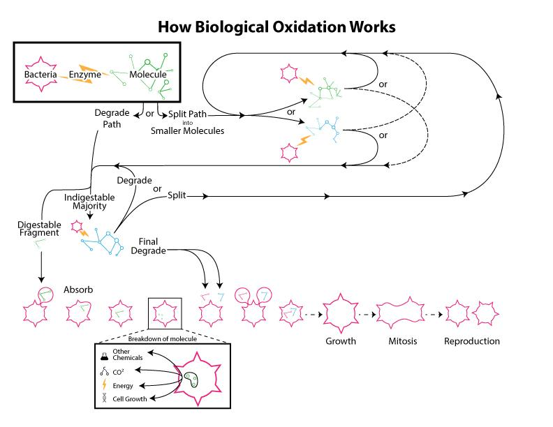 biological oxidation diagram